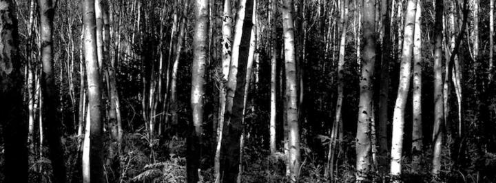 Darßer Wald (C) Lothar Eder 2017